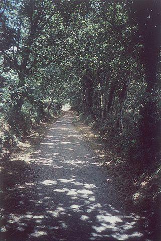ein schattiger Laubenweg