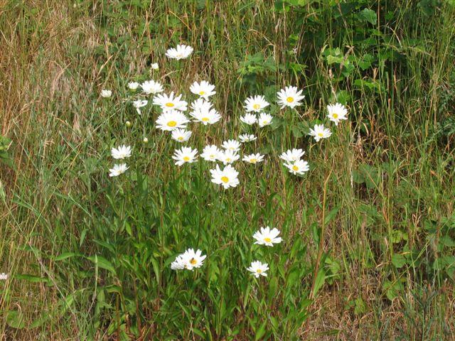 eine sonntägliche Blumenpracht