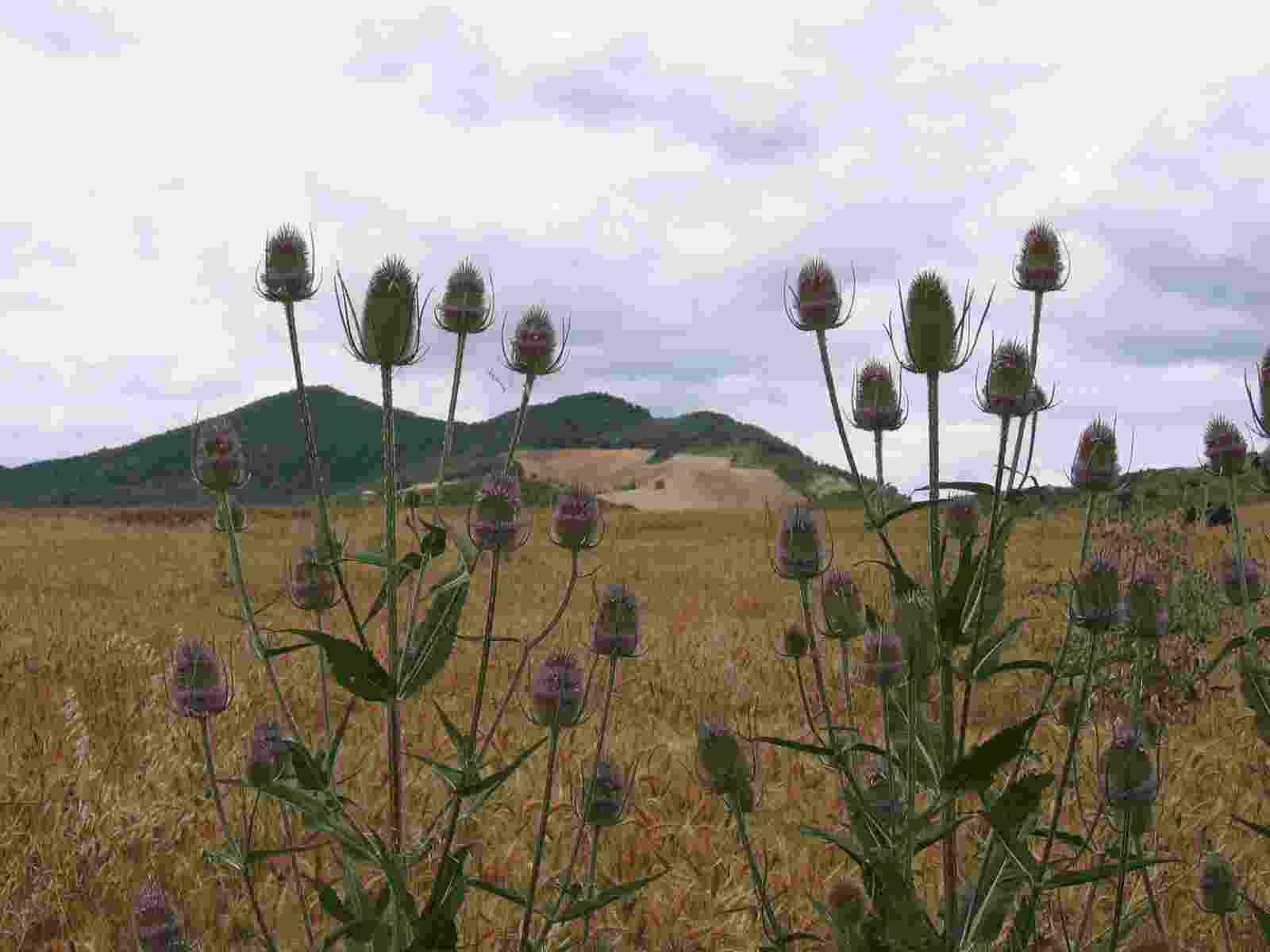 Karden und die Ausläufer der Pyrenäen
