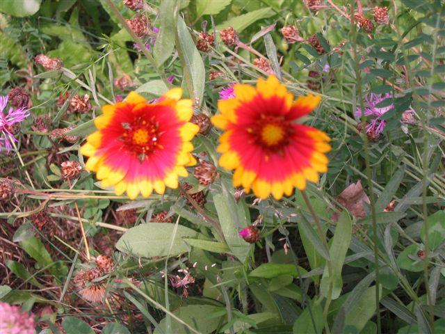 Wildblume am Wegesrand