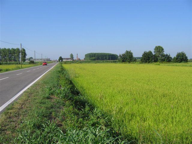 Mais- und Reisfelder soweit das Auge reicht